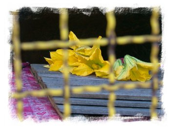 in un giardino a Mazzin di Fassa